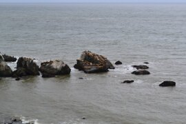 Dozens of seals playing at Seal Point on the Lost Coast Trail
